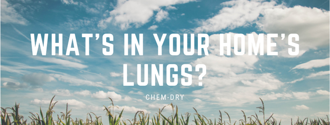What's In Your Home's Lungs?